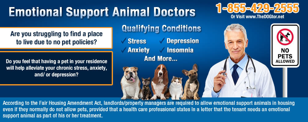 seattle emotional support animal prescription letter online emotional support animal approval prescriptions